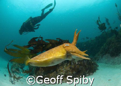 taken this morning in the cold waters of Cape Town using ... by Geoff Spiby 